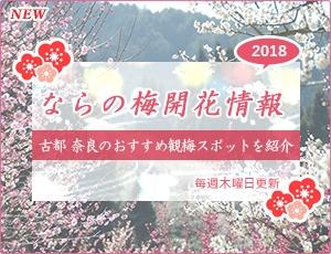 ならの梅開花情報2018