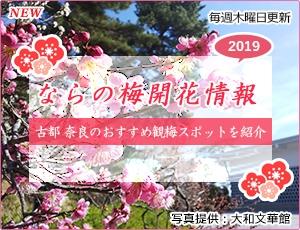 ならの梅開花情報2019