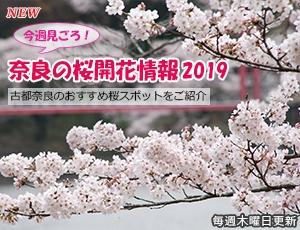 ならの桜開花情報2019