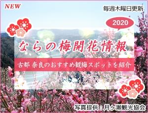ならの梅開花情報2020