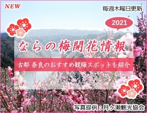 ならの梅開花情報2021