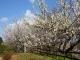 2月20日あたりに見ごろを迎える梅の開花情報を追加しました