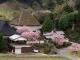 4月10日あたりに見ごろを迎える桜の開花情報を追加しました